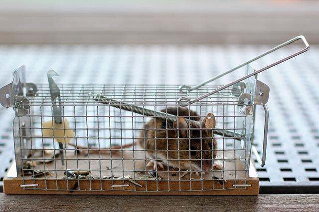 myš v kleci