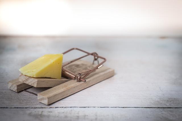 sýr v pasti