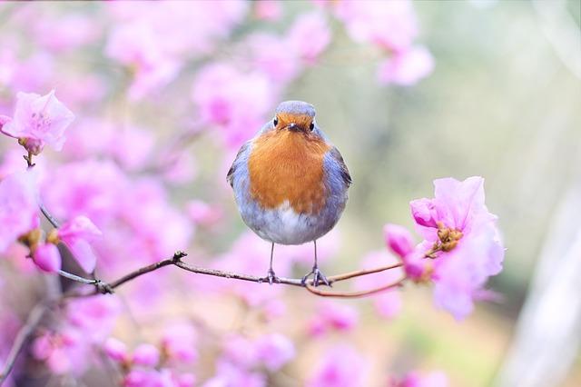 ptáček na větvičce
